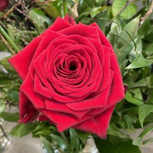 Ruusu punainen pitkä