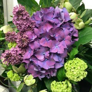 Kimppu kauden kukista, lila