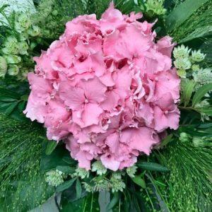 Vaaleanpunainen hortensiakimppu