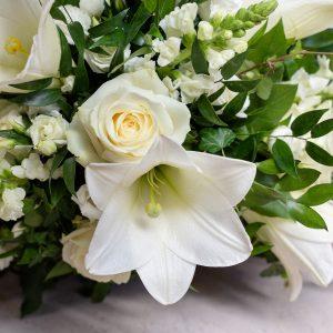 Suruvihko, valkoinen, ruusulla